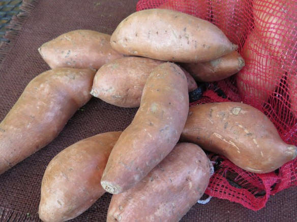 louisiana sweet potatoes - IMG_0656_1