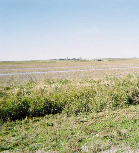 387404-R1-046-21A-rice field