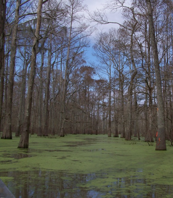 swamp - 1 - 100_3683