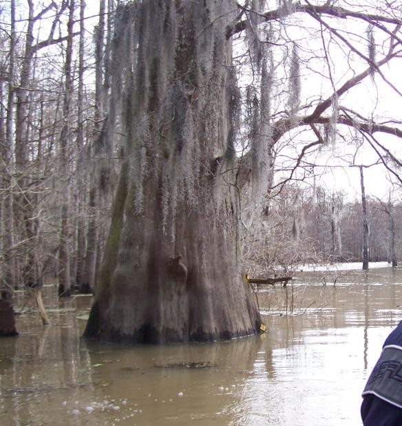 swamp - 2 - 100_3685