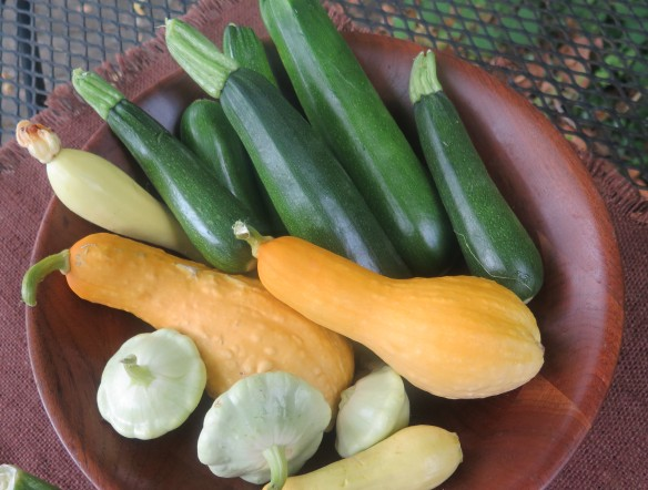 summer squash from garden - 2 - IMG_4608_1