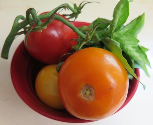 colorful tomatoes and basil - IMG_5911_1