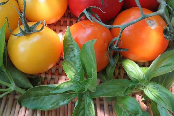 fresh basil and tomatoes - IMG_5868_1