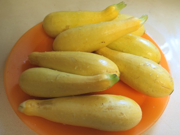 plate of yellow squash - IMG_6113_1