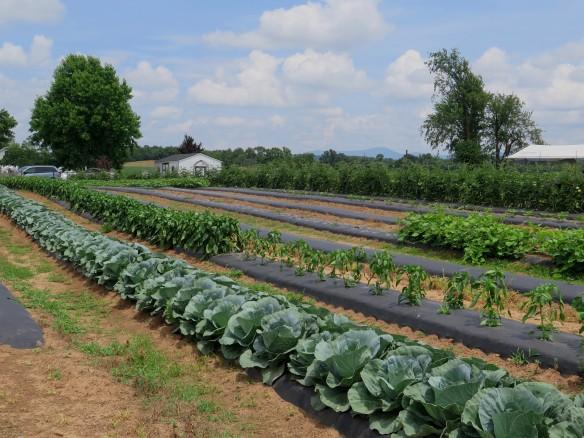 Shenandoah Valley Farm - IMG_5714_1