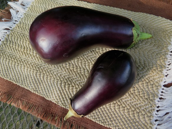 Eggplant - IMG_7036_1