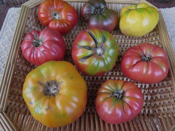 Heirloom Tomatoes - IMG_6665