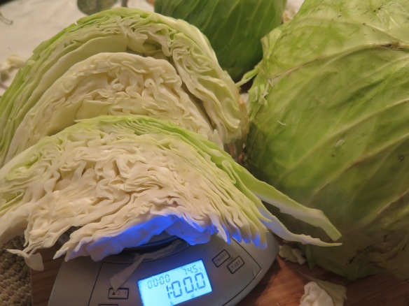 Weighing Cabbage - IMG_8311