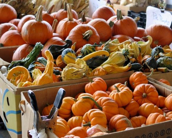 pumpkins - 2 - IMG_8102