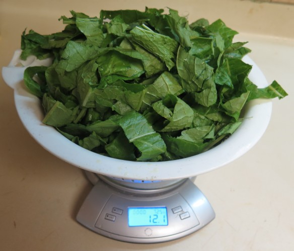 Giant Mustard Greens - cut up - IMG_1382_1