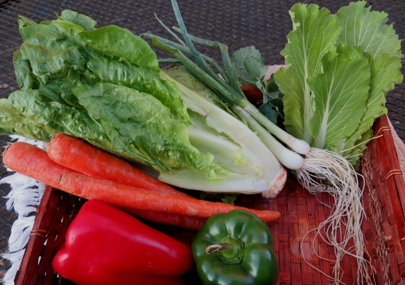 Ingredients-vegetables-carrots-lettuce-IMG_2172