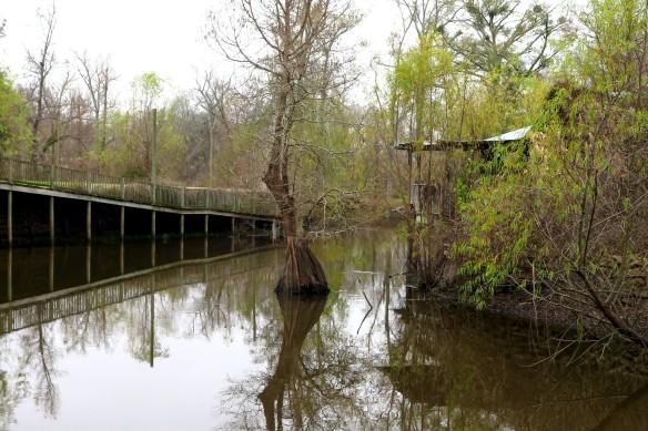 Alligator Bayou 2015 - IMG_1272_1R_1