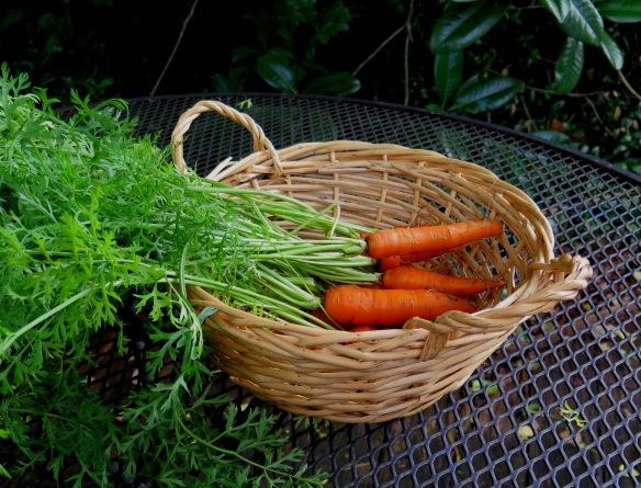 Monsanto Carrots - IMG_3594_1- R2