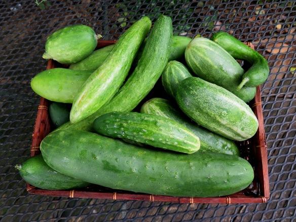 Basket of Cucumbers - IMG_3598