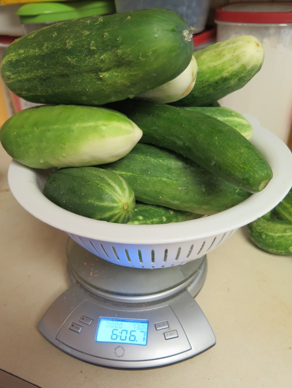 cucumbers on a scale - IMG_3601