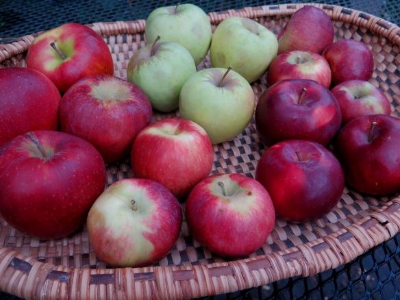 Rochester Apples - 2015 - IMG_5515