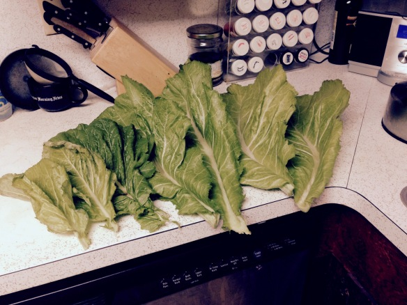 Fresh Mustard Greens on Counter - FullSizeRender (13)