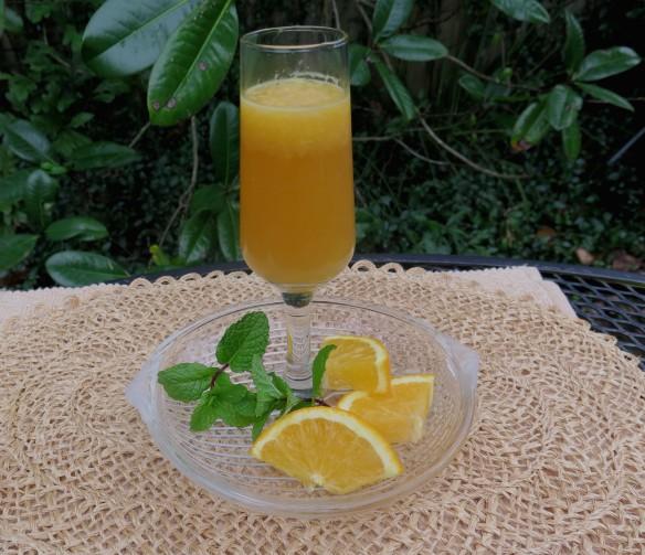 Mimosa - 1 - IMG_6778_1