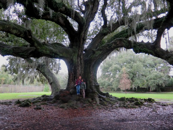 Tree of Life - 3 - IMG_6625_1