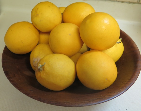 Meyer Lemon Crop - IMG_6915