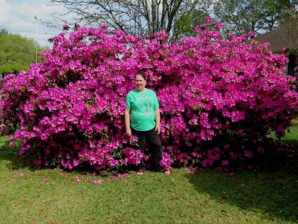 Azaleas - IMG_8055