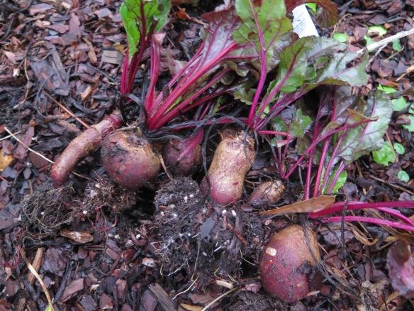 Garden Beets - IMG_7436
