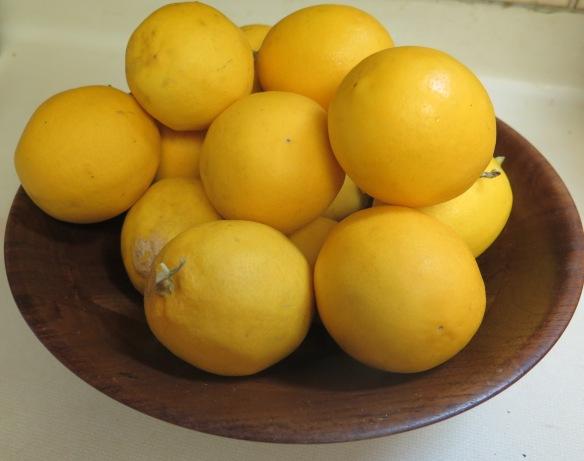 Meyer Lemons - IMG_6915