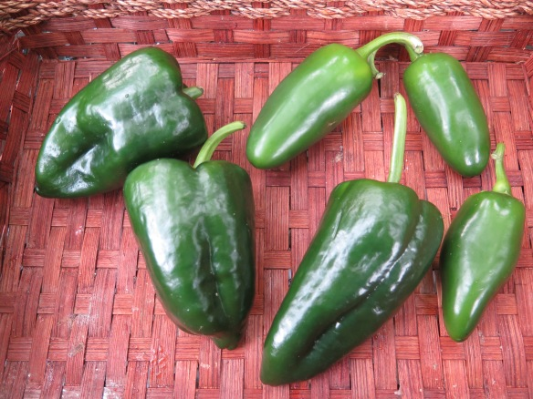 poblano-and-jalapeno-peppers-from-csa-basket-img_9361