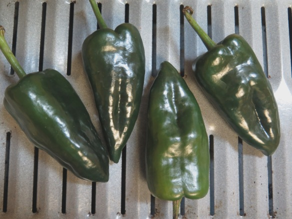 poblano-peppers-ready-for-charring