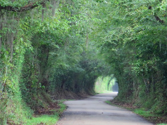 scenic-road-in-st-francisville-img_1017_1