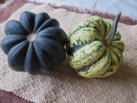 acorn-squash-img_0780_1