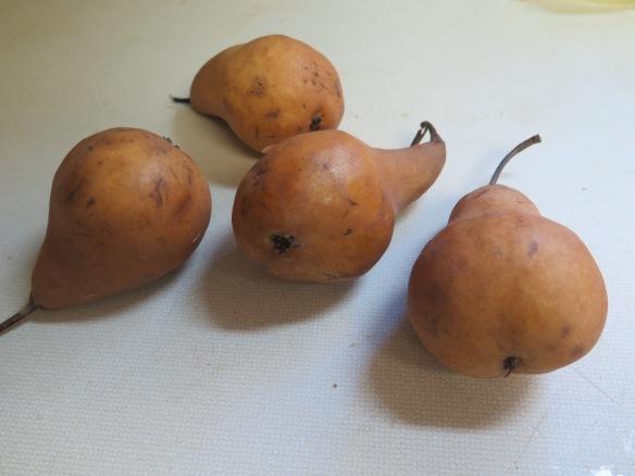bosc-pears-img_1753