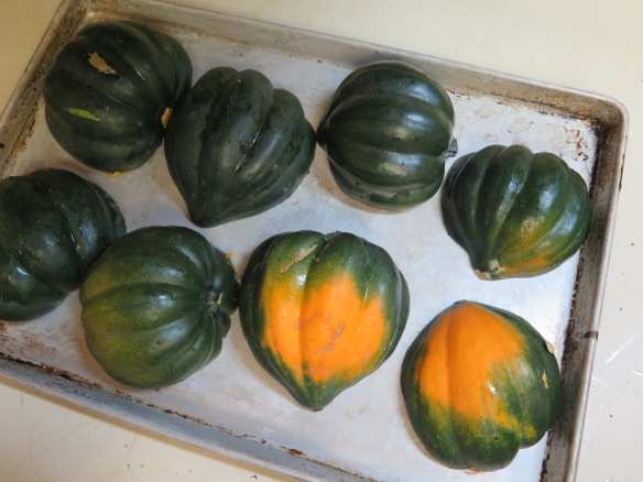 halved-squash-ready-for-baking-img_1918
