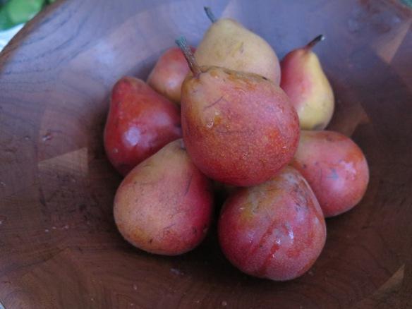 seckel-pears-img_2263